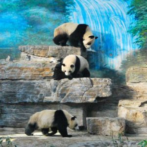 Panda-House
