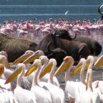 3 Lake Nakuru National Park
