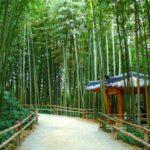5 Juknokwon Bamboo Garden